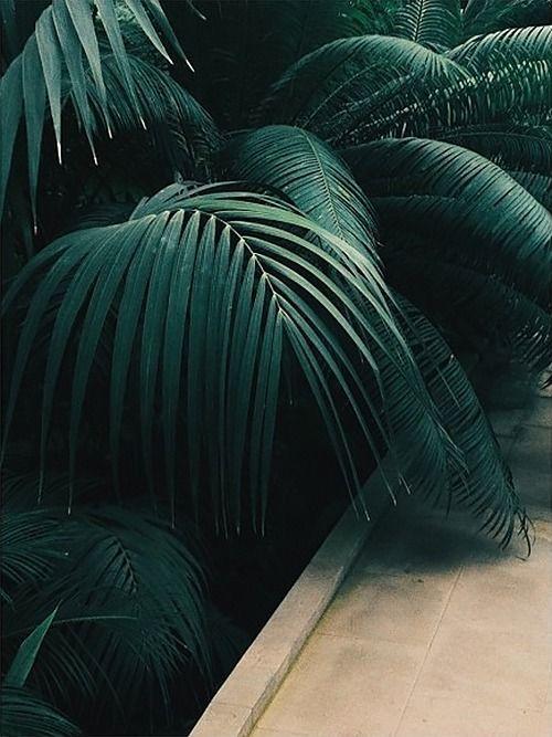 Dark Green Palm.jpg