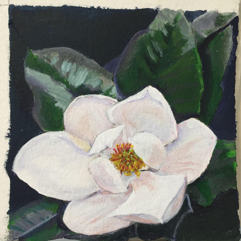 M. grandiflora study #5  2016