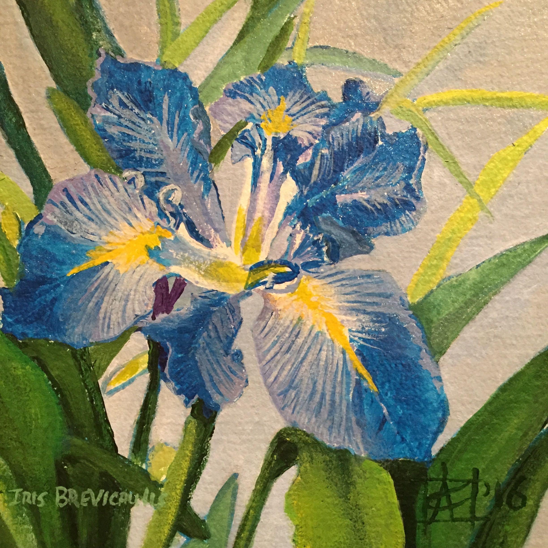 "Iris Brevicauli 2016acrylic on paper 10x10"" $500"