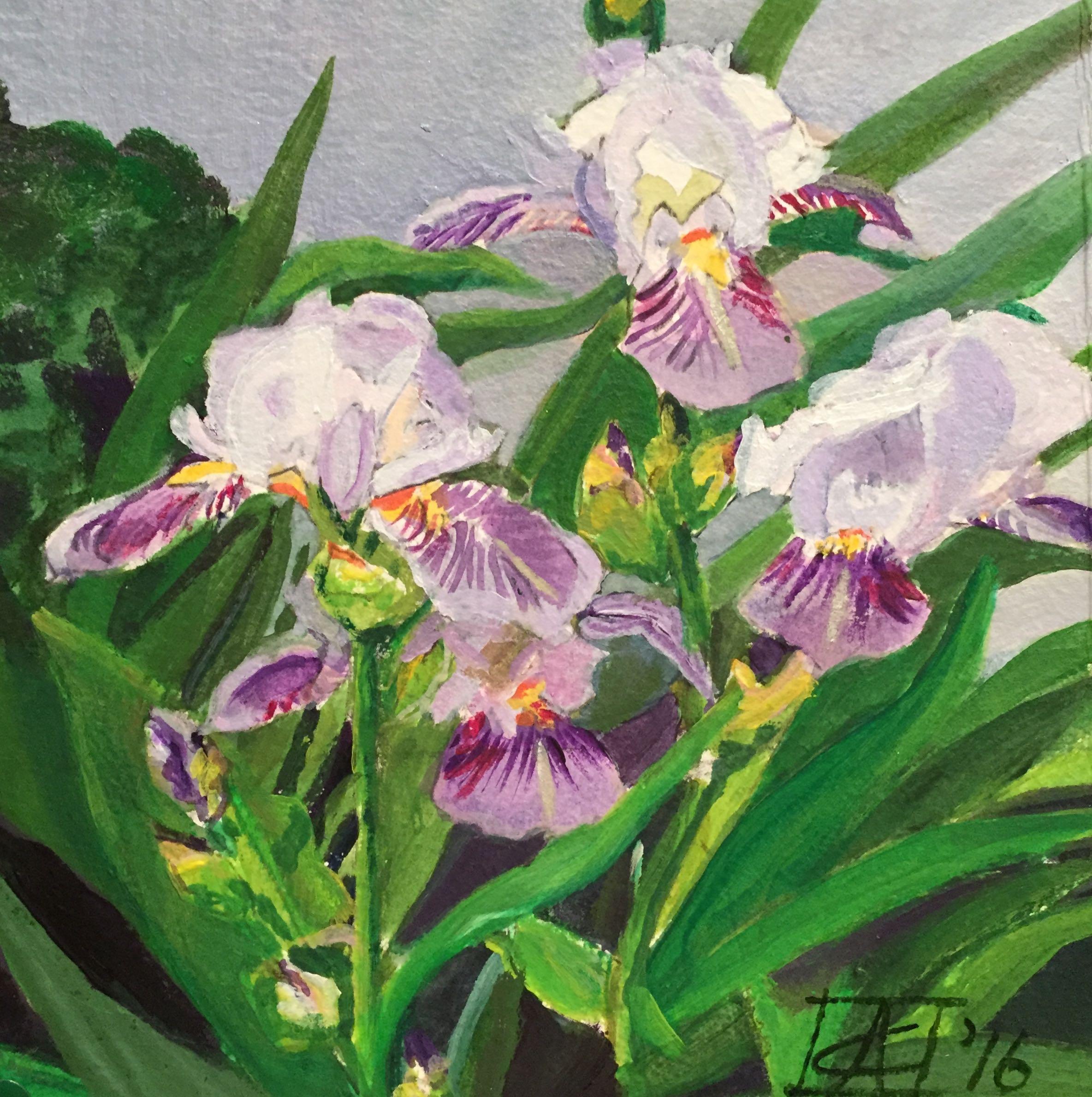 "Bearded Iris 2016 acrylic on paper ca 10x10""   $500"