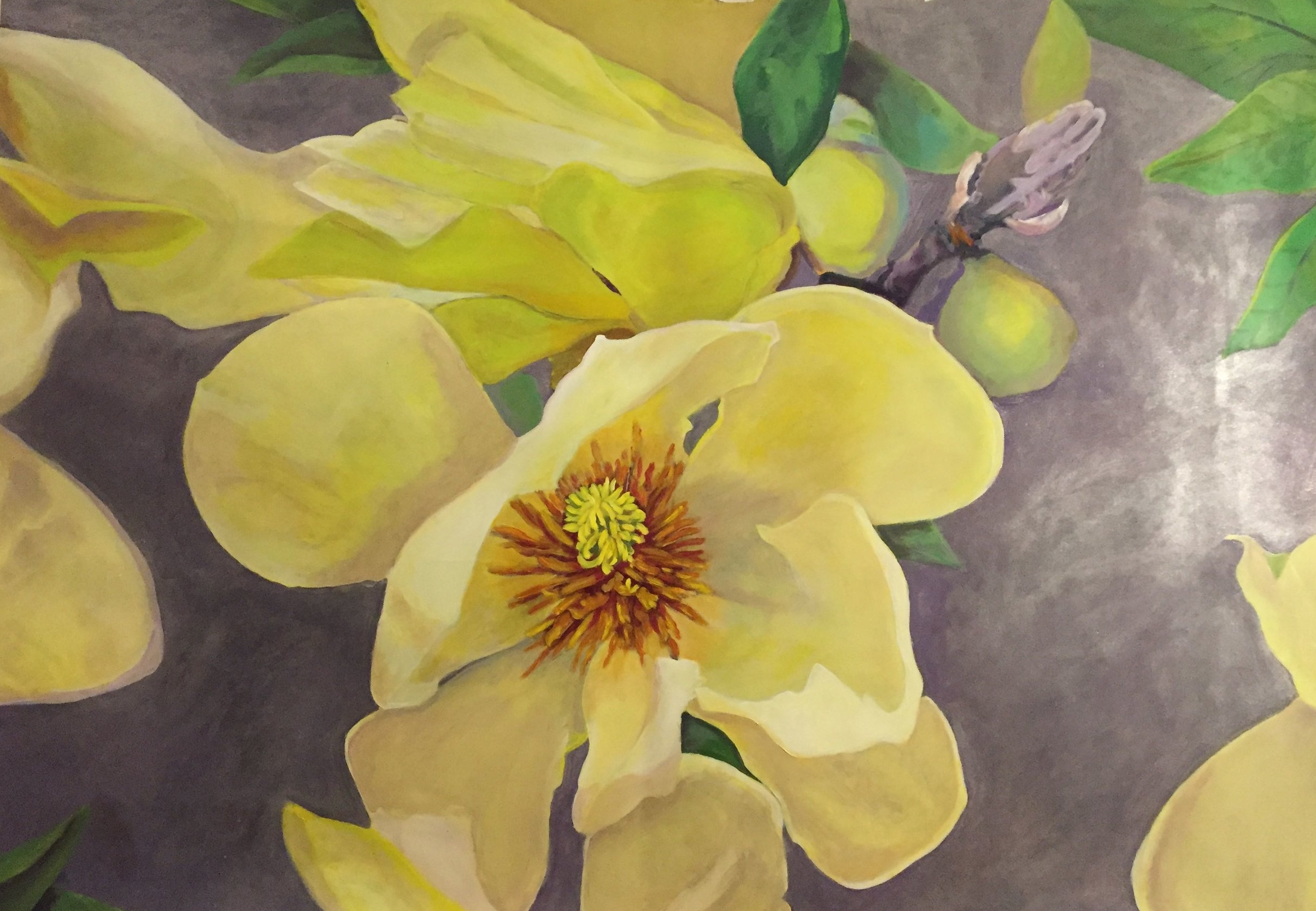 Magnolia Yellow Bird   2016