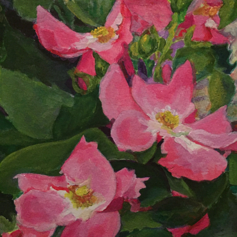 rosa rugosa.jpg