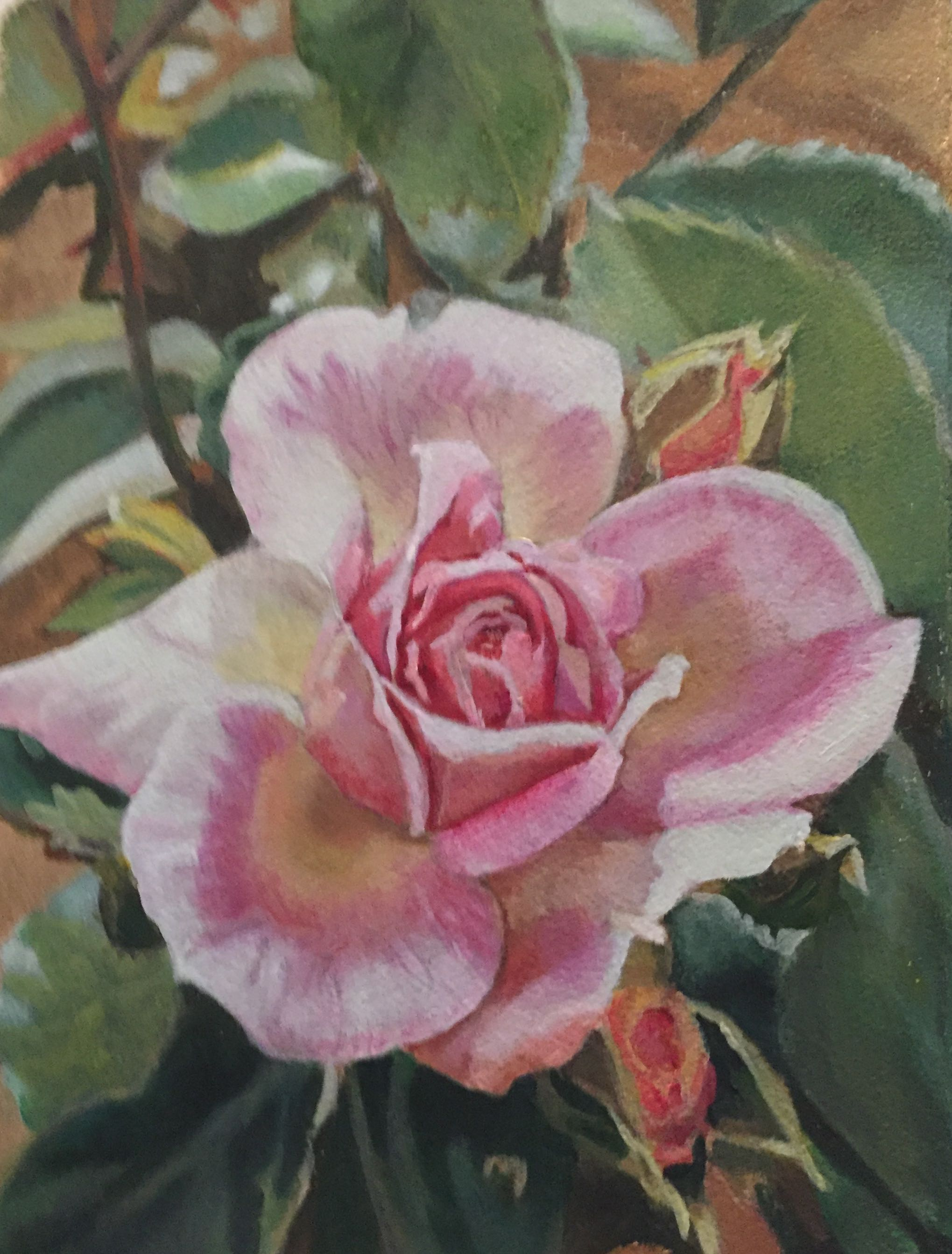 "Rosa hybrid Musk ""Bloomfield Dainty""  2006"