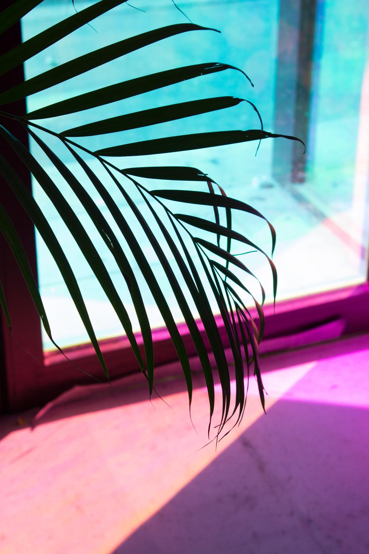 détails tropical atelier.jpg