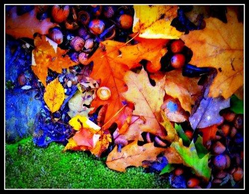 Leaves#1.jpg
