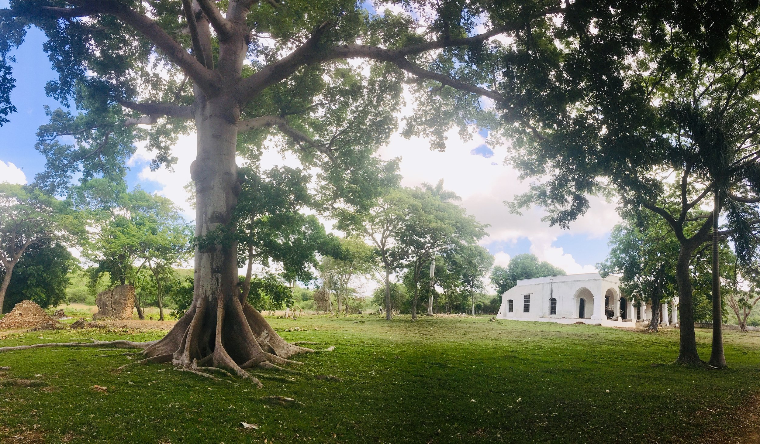This old tree was the gathering place of slaves on Sundays.