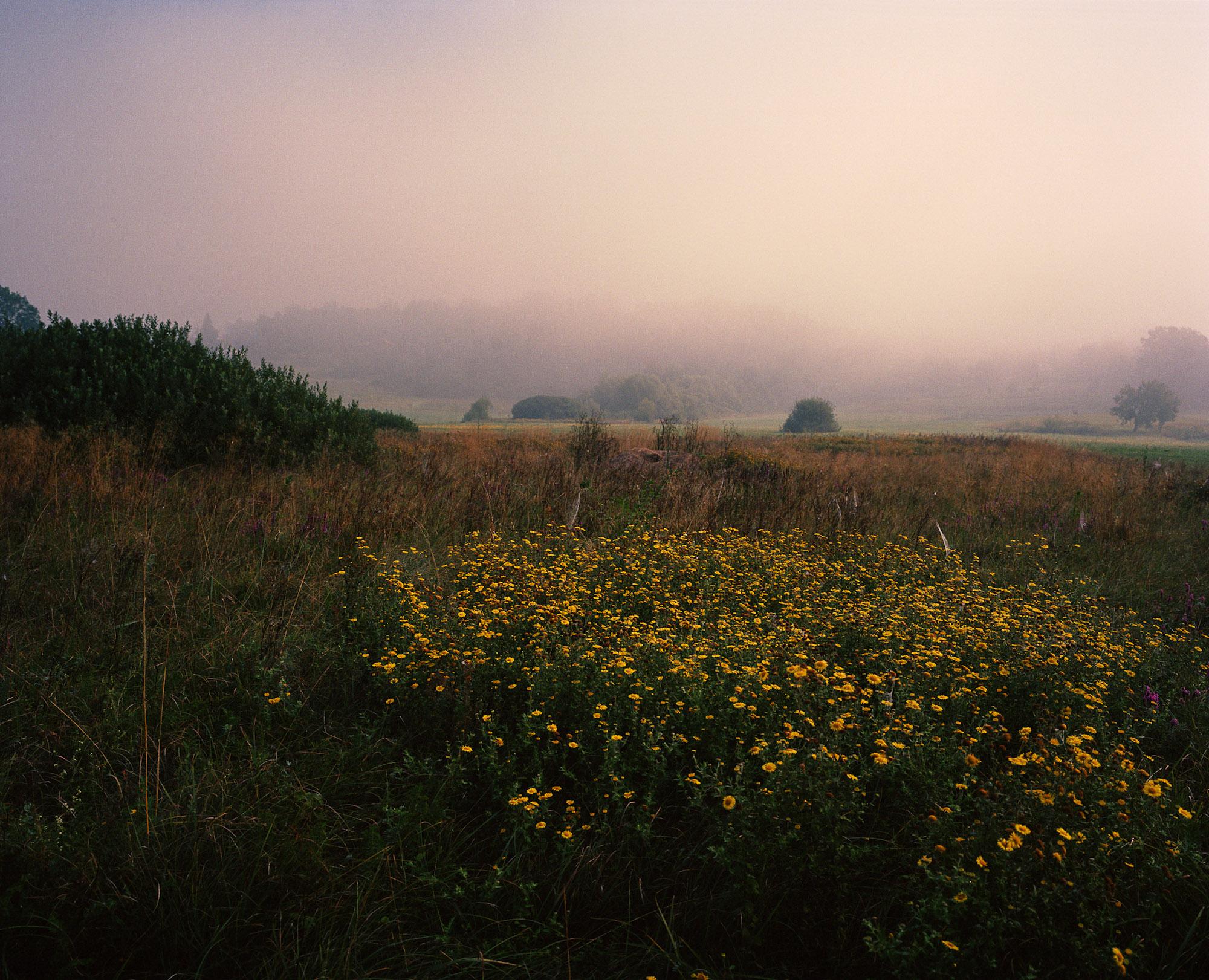 05 Fog_Kruscica.jpg