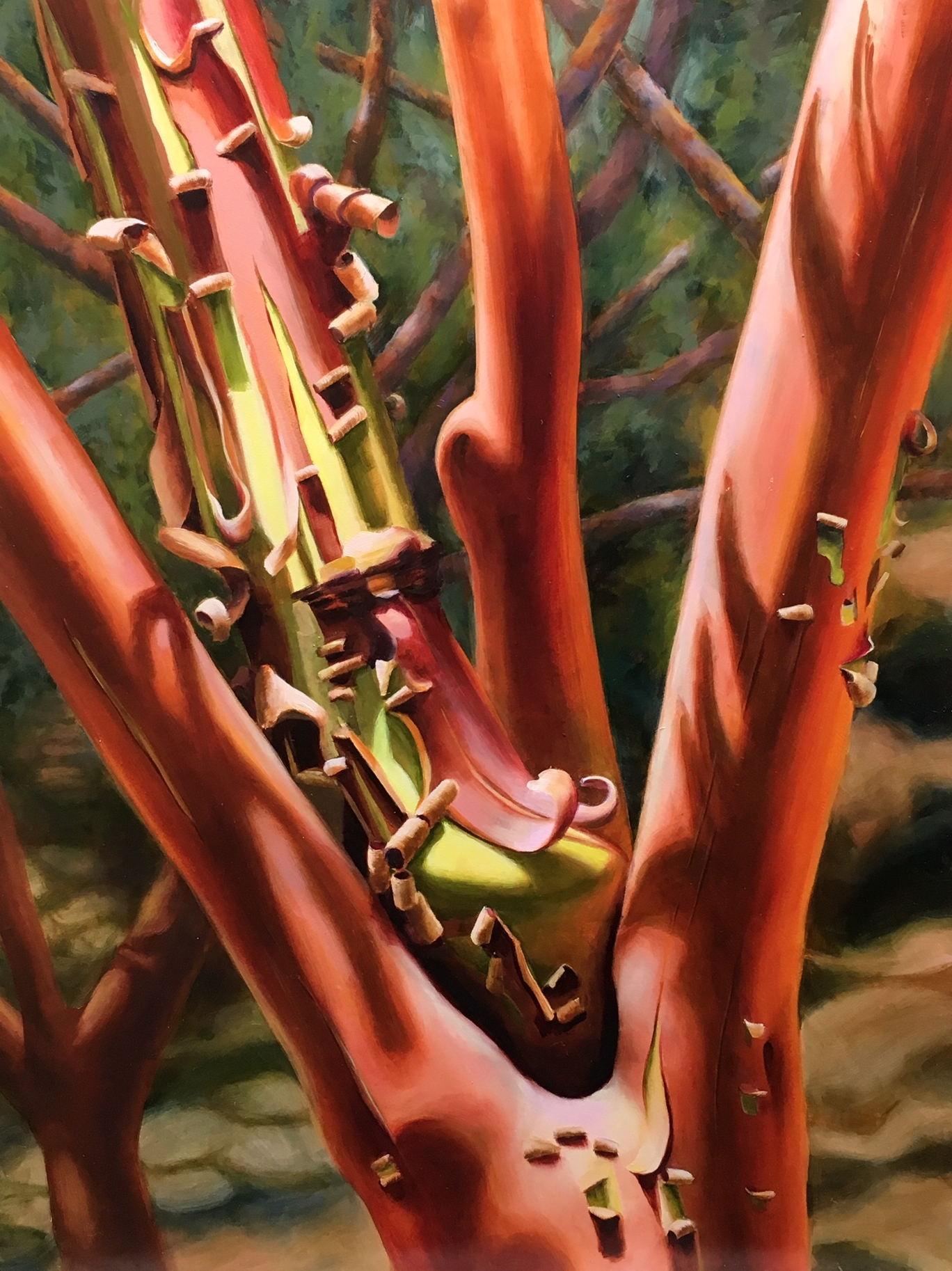 Peeling Manzanita  - 18x24 - Oil on Panel