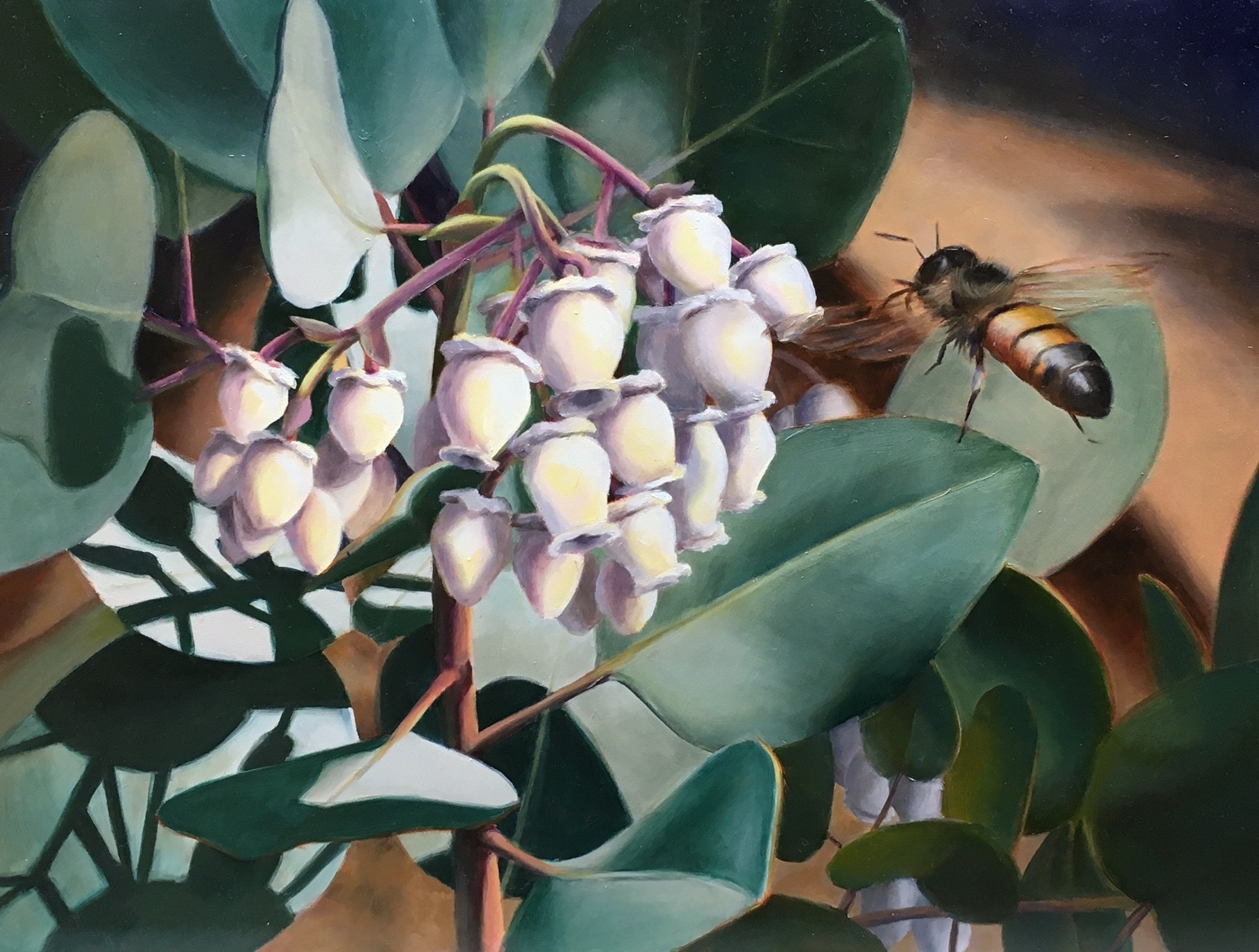 Bee and Manzanita Blossoms  - 12x16 - Oil on Panel
