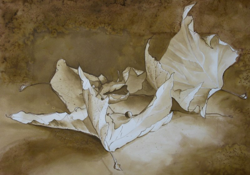 Sycamore Leaves - 18x20 - Walnut ink and wash on paper