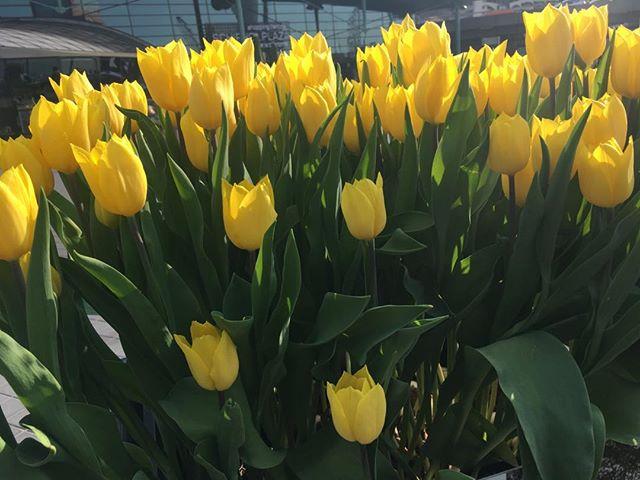 Spring in Amsterdam!