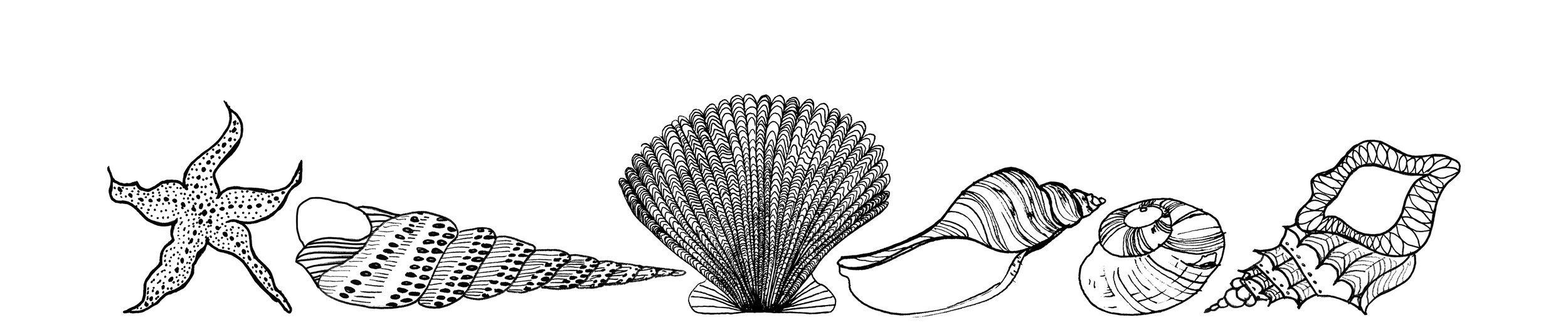 shellss.jpg