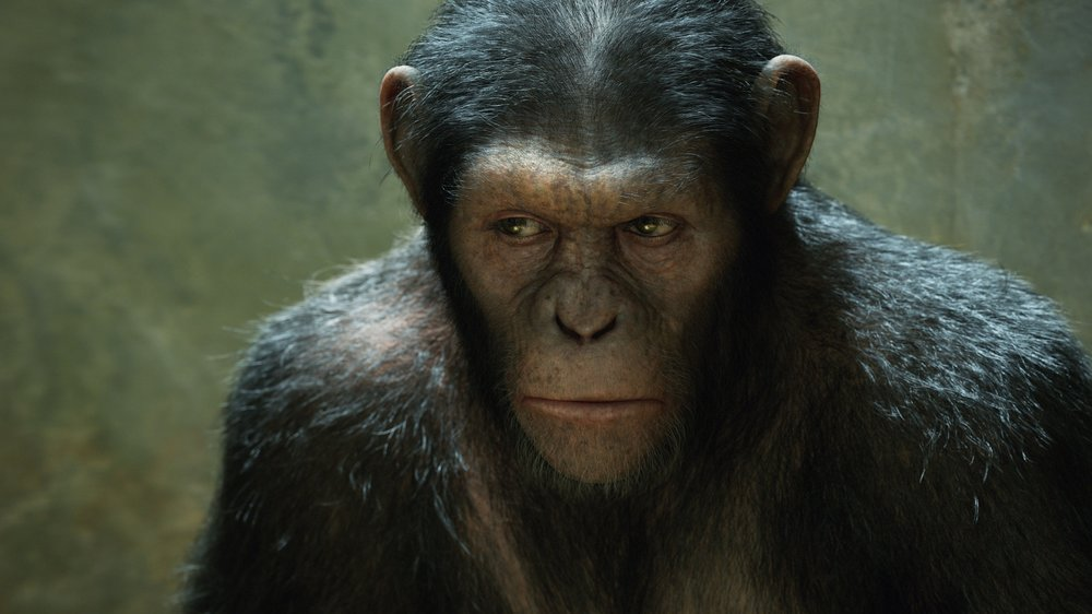 Caesar Is Home Rise Of The Planet Of The Apes 2011 Talk Film Society