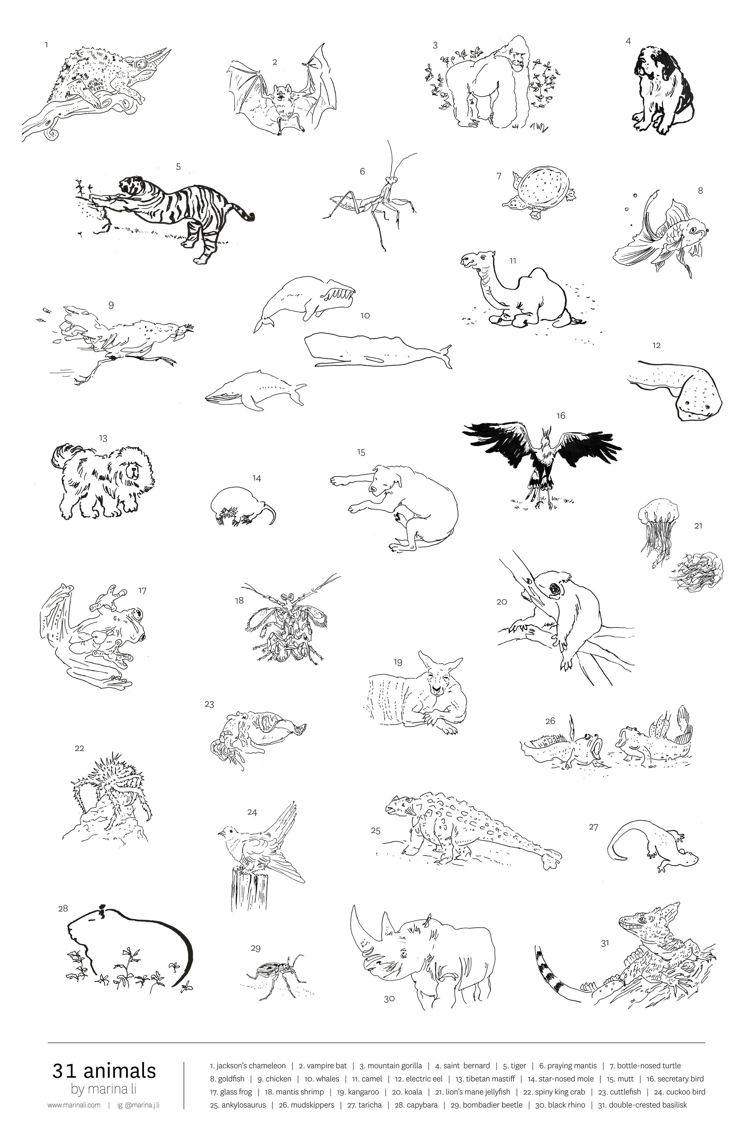 AnimalPoster_Final2.jpg
