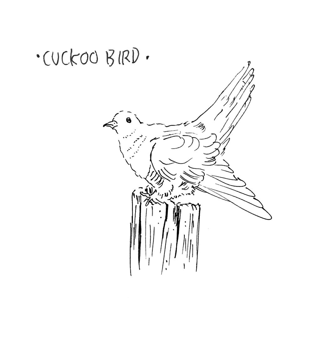 cbird1.jpg