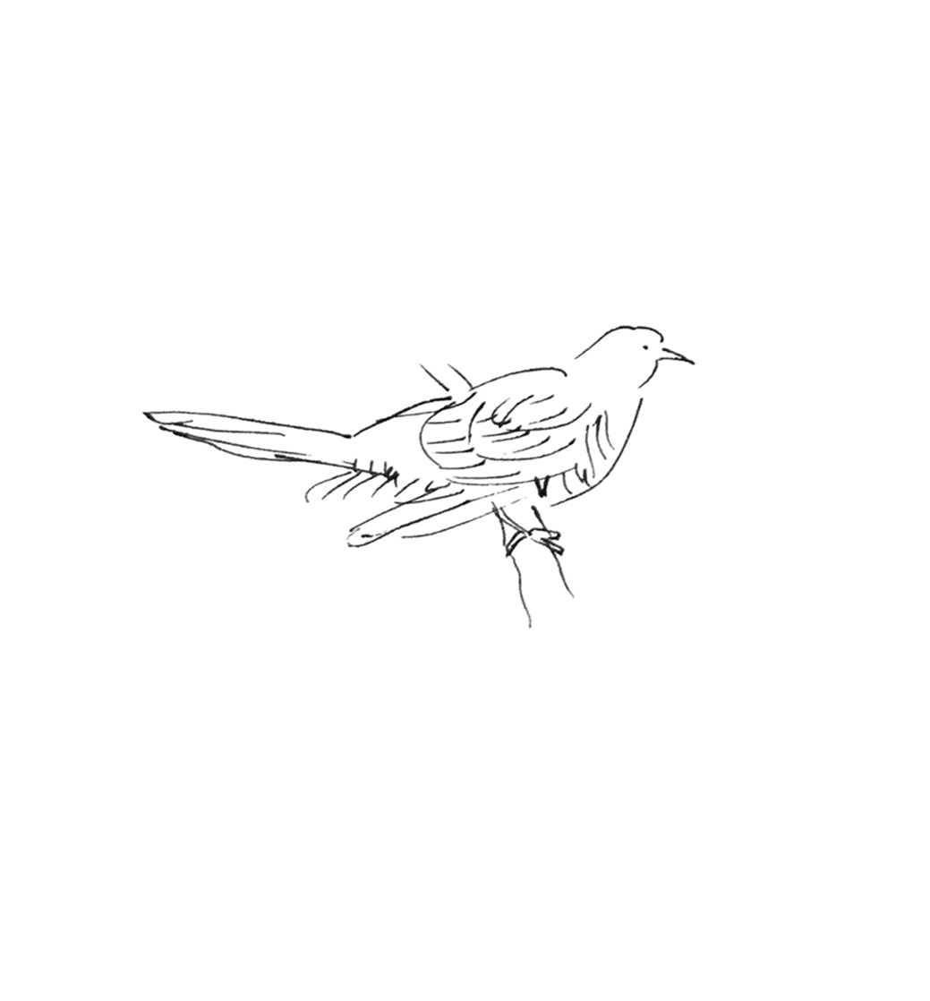 cbird3.jpg