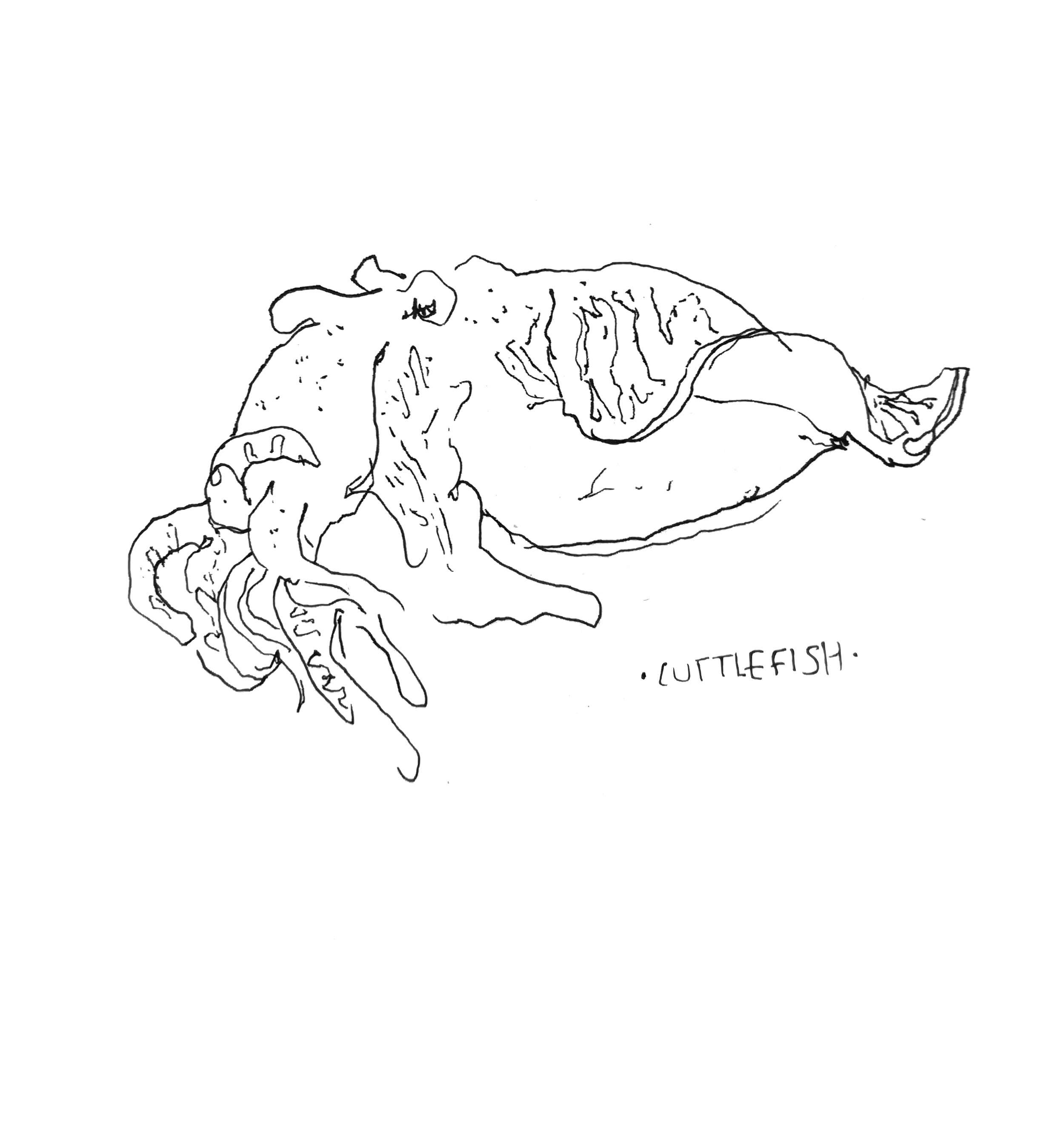 cuttlefish1.jpg