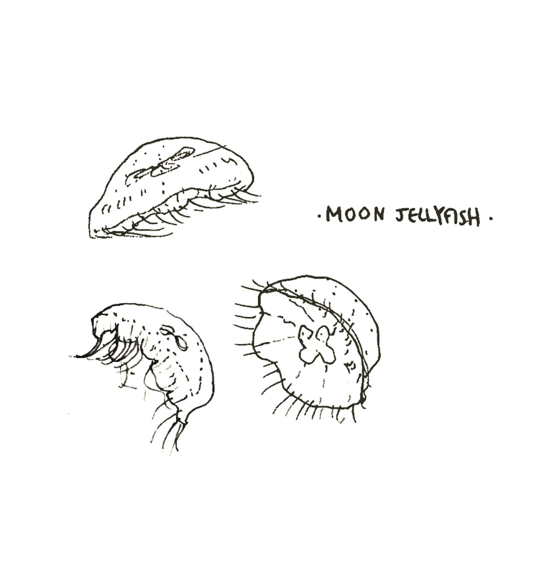Moonjelly.jpg