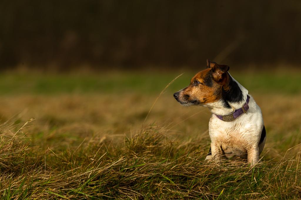 terrier-6298.jpg
