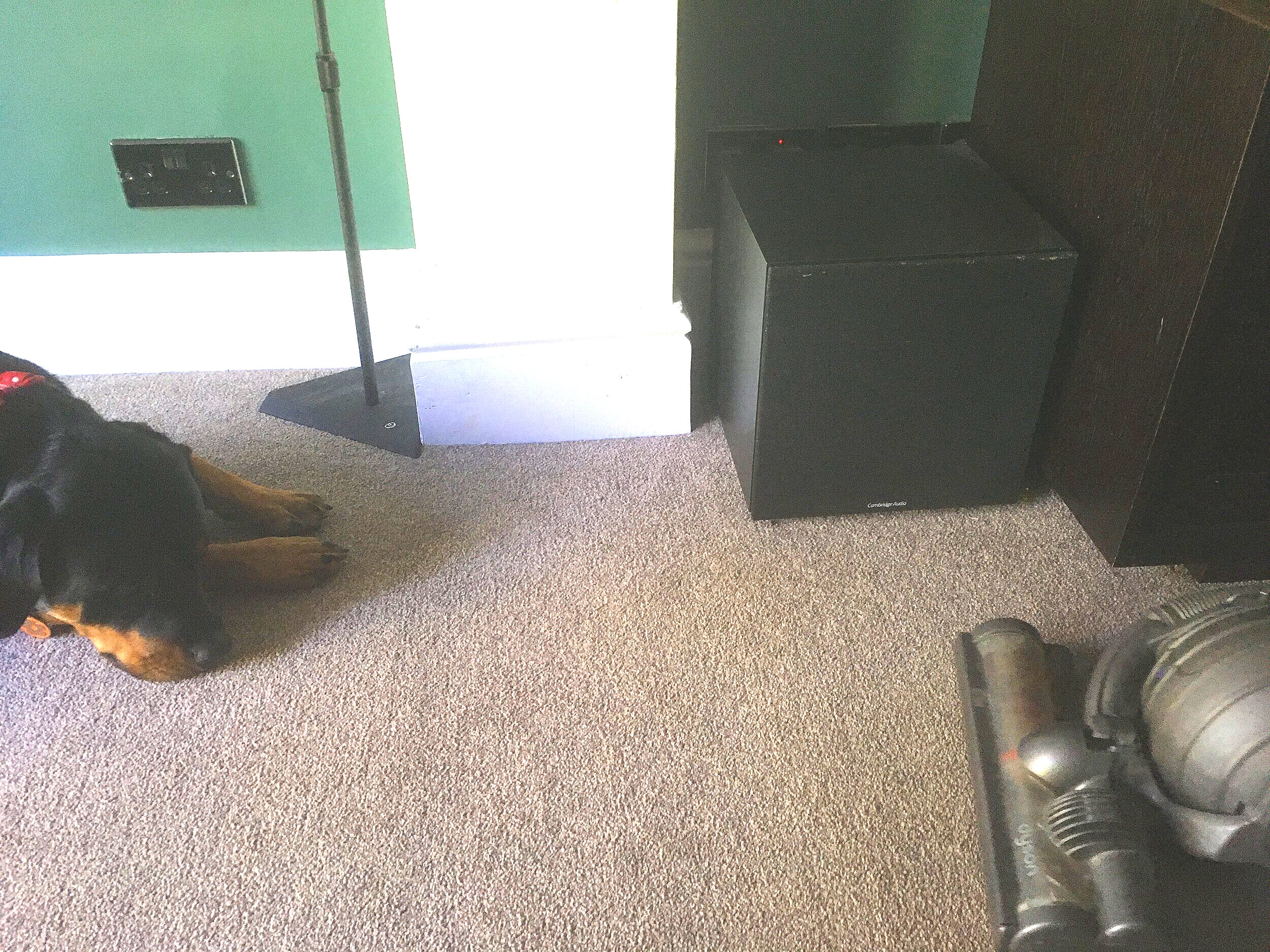 rotweiller and vacuum cleaner.JPG