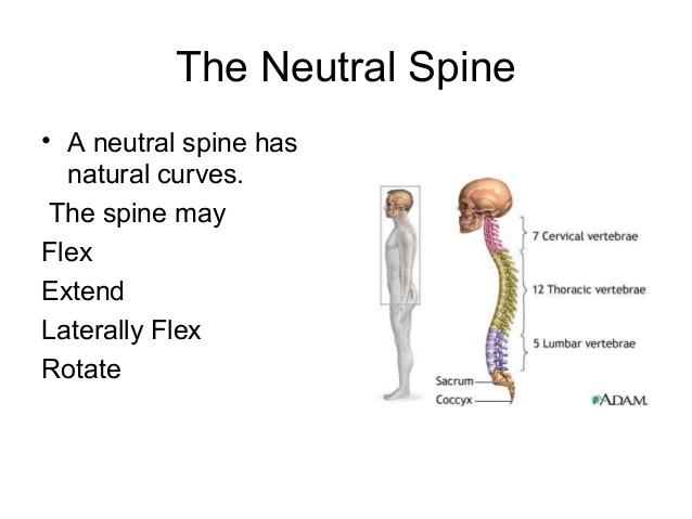 Neutral Spine.jpg