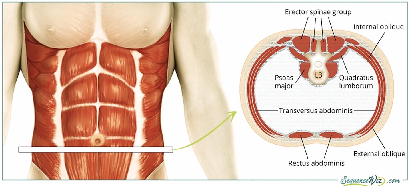 Core Muscles.jpg
