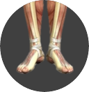 Ankle & Foot Image.png