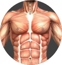 Thoracic Spine Image.png