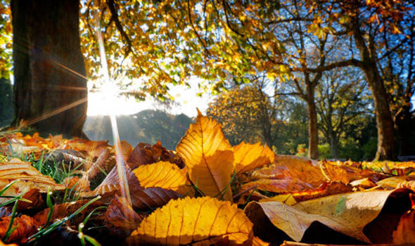 leaves-autumn-sun-615365.jpg