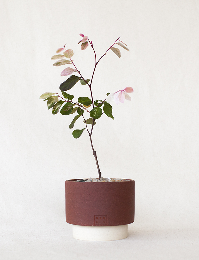 SHOP PLANTS - Our plant collection is now available online to reserve.