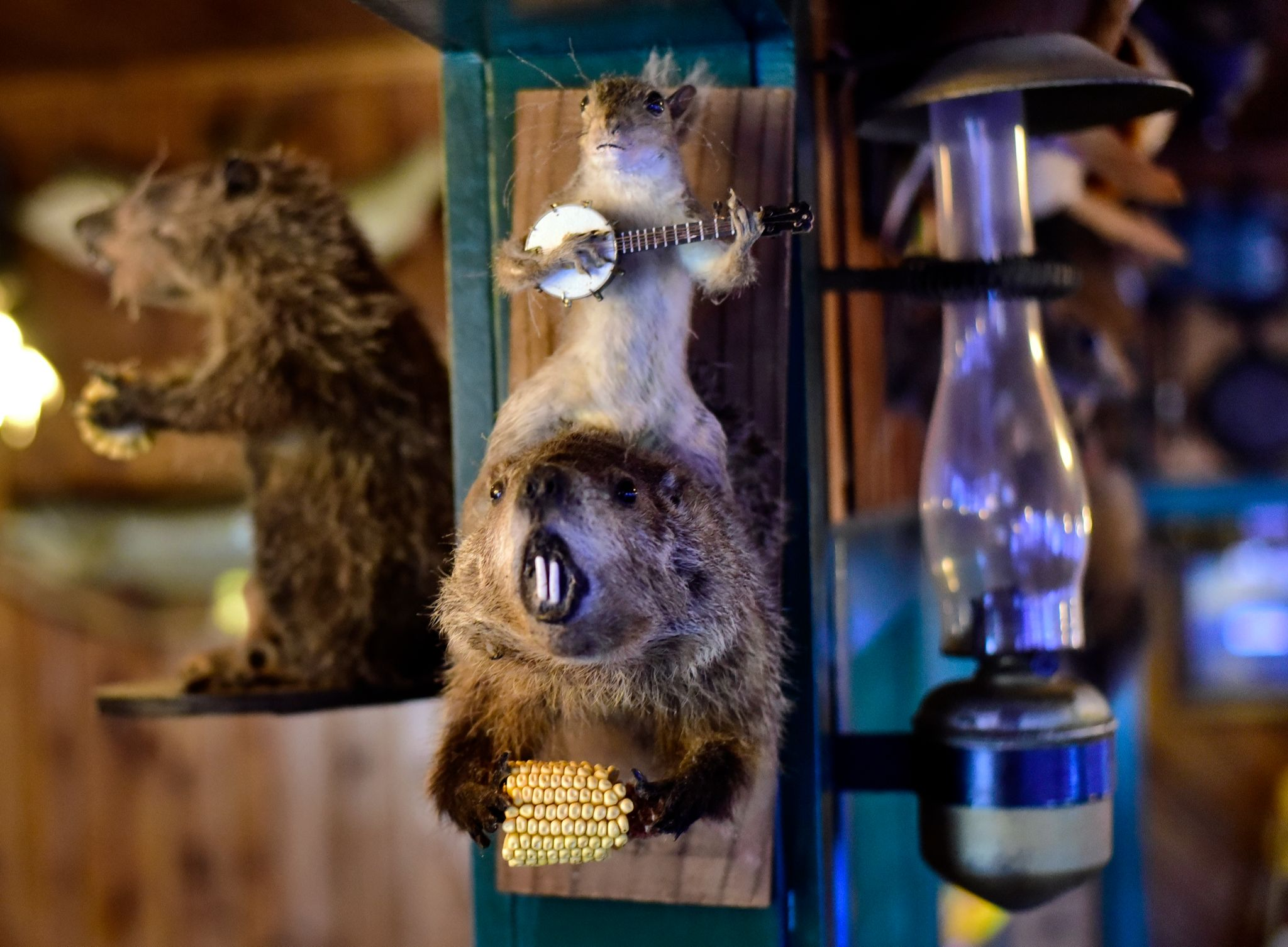 Adam has a good friend, Zach, who runs a taxidermy service and sometimes will make silly scenes out of animals. 'Kenny' is the squirrel that plays the banjo.