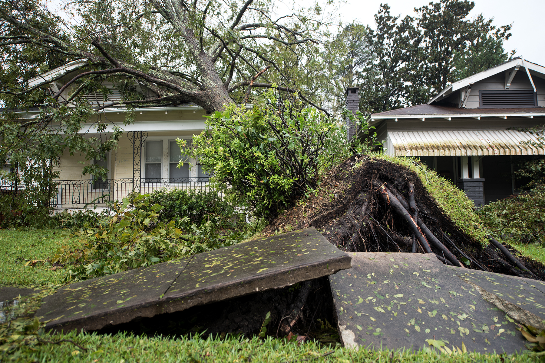 A tree is pulled from the ground and has fallen ontop of a house from Hurricane Florence in the Southside district in Wilmington, NC, USA, September 15, 2018.
