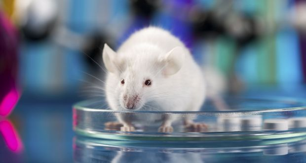 Between 10-25% of the lab mice exposed to Carbon Nanotubes began to develop Mesothelioma.