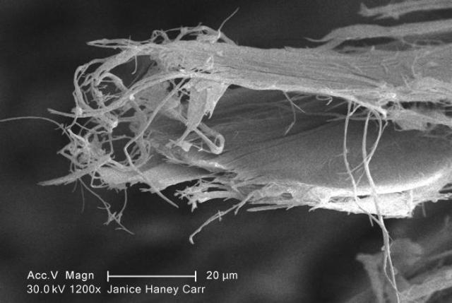 Asbestos, Microscope, Demolition