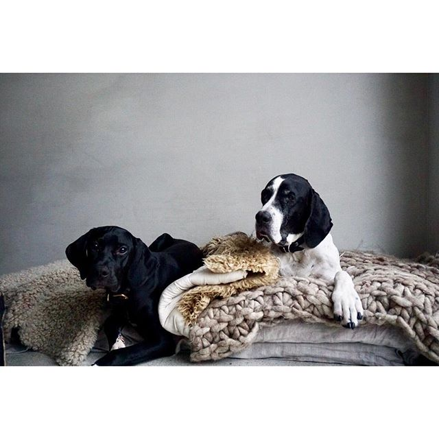 The dogs  #北欧 #ノルウェー  #犬 #インテリア #アート #コミュニティ #デザイン #aquietday #scandinavia #nordic #norway #dog #design #interior #北欧インテリア #decor #dekor #vintage #vsco #vscocam #生活 #暮らし #life #lifestyle