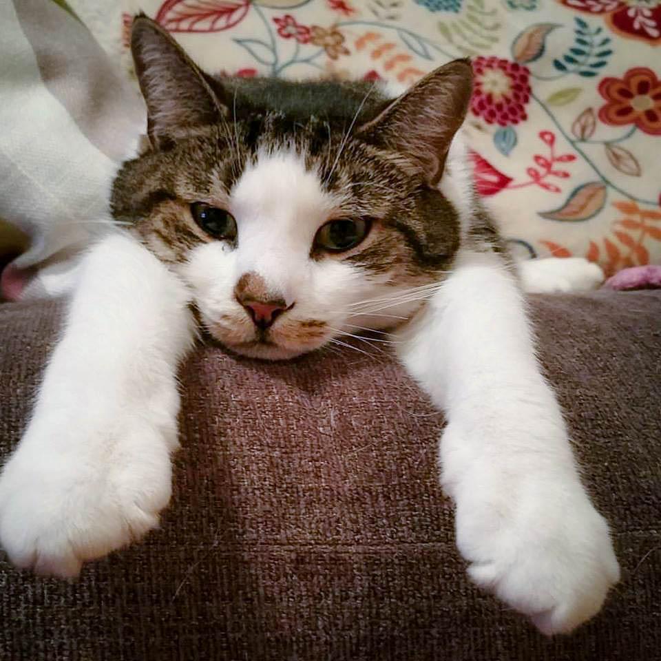 Mr. Petey the Cat