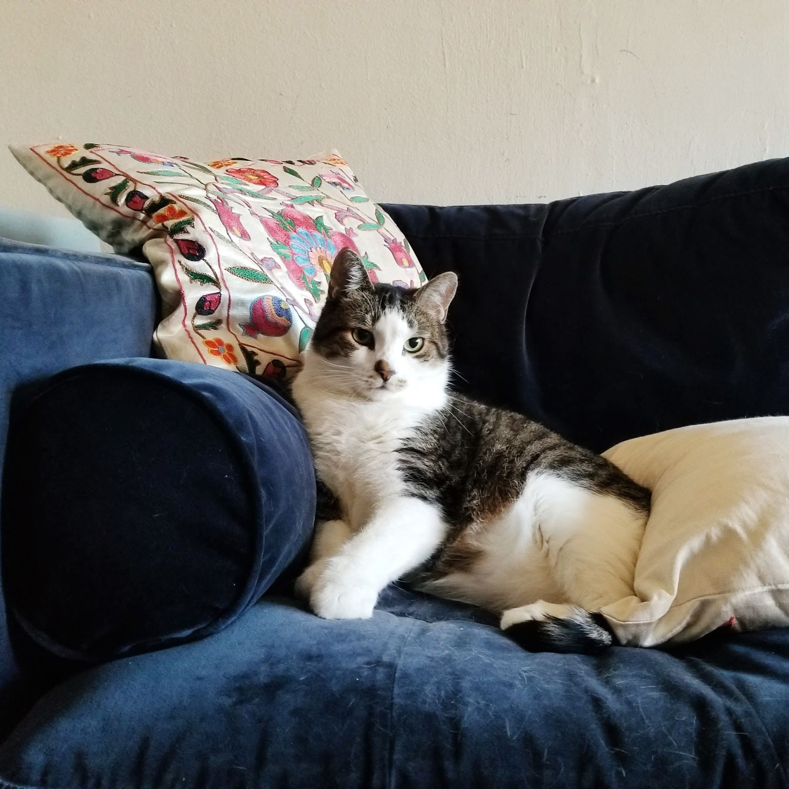 Mr. Petey the Cat (aka: King of the couch!)