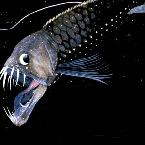 Image Source: http://www.arcanumvet.com/black-dragonfish/