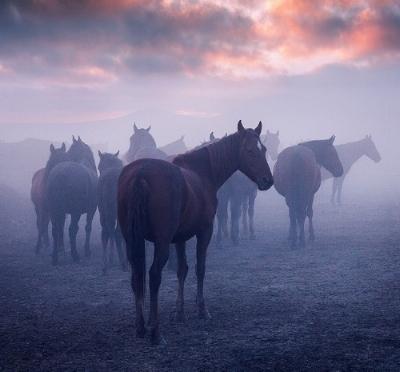 Meditation+with+Horses.jpg