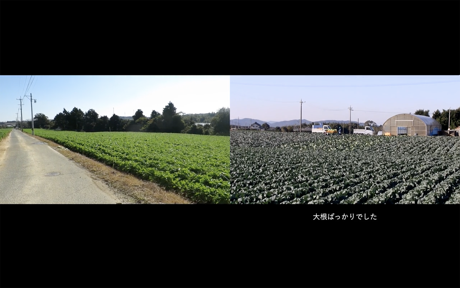 2018_Our-Food-2-Daikon_Movie_01.png
