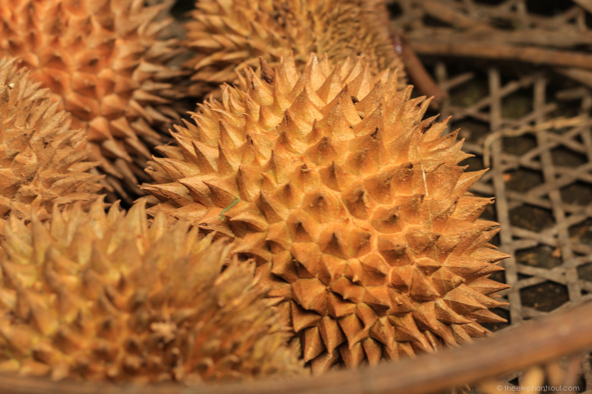 This exotic looking fruit is called durian and it is found in South East Asia. The photo was taken during our trip to Bali, Indonesia.
