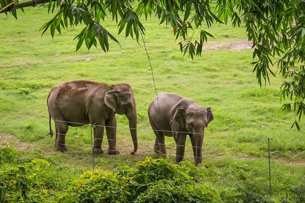 Former working elephants enjoying life in retirement at their stupendous chain-free corral.