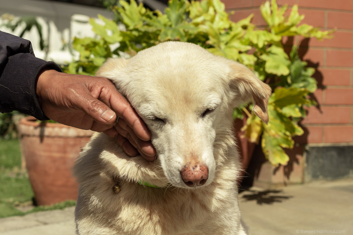 Buddy, our Nepalese street dog, has touched the lives of so many people around him.
