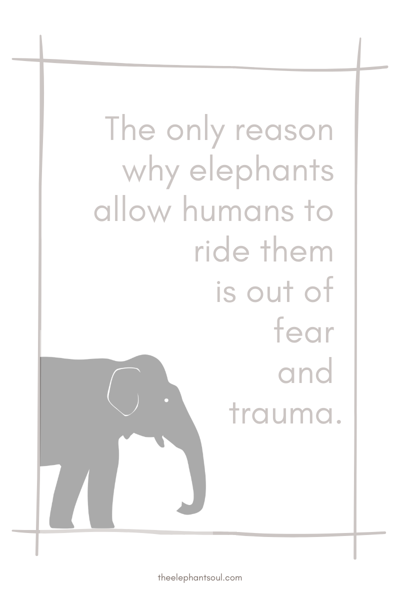 Elephants only allow humans to ride them out of fear and trauma - The Elephant Soul blog.png