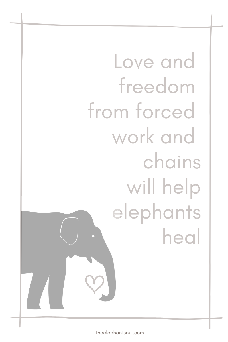 Love and freedom will help elephants heal - The Elephant Soul blog.png