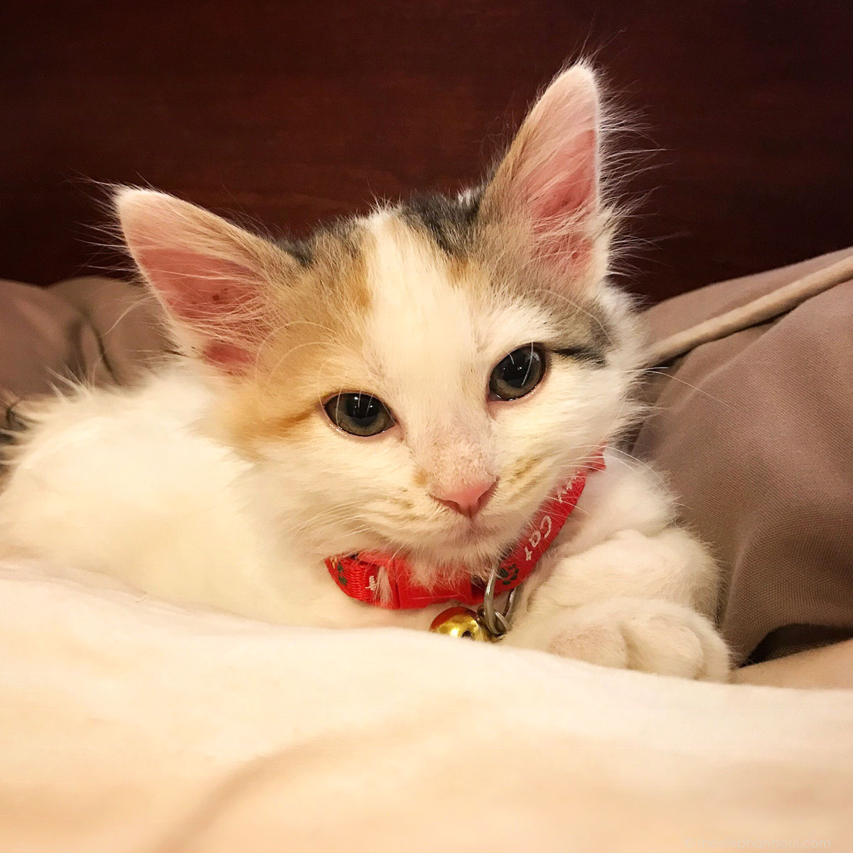 Our precious kitten Najia when she was three months old.