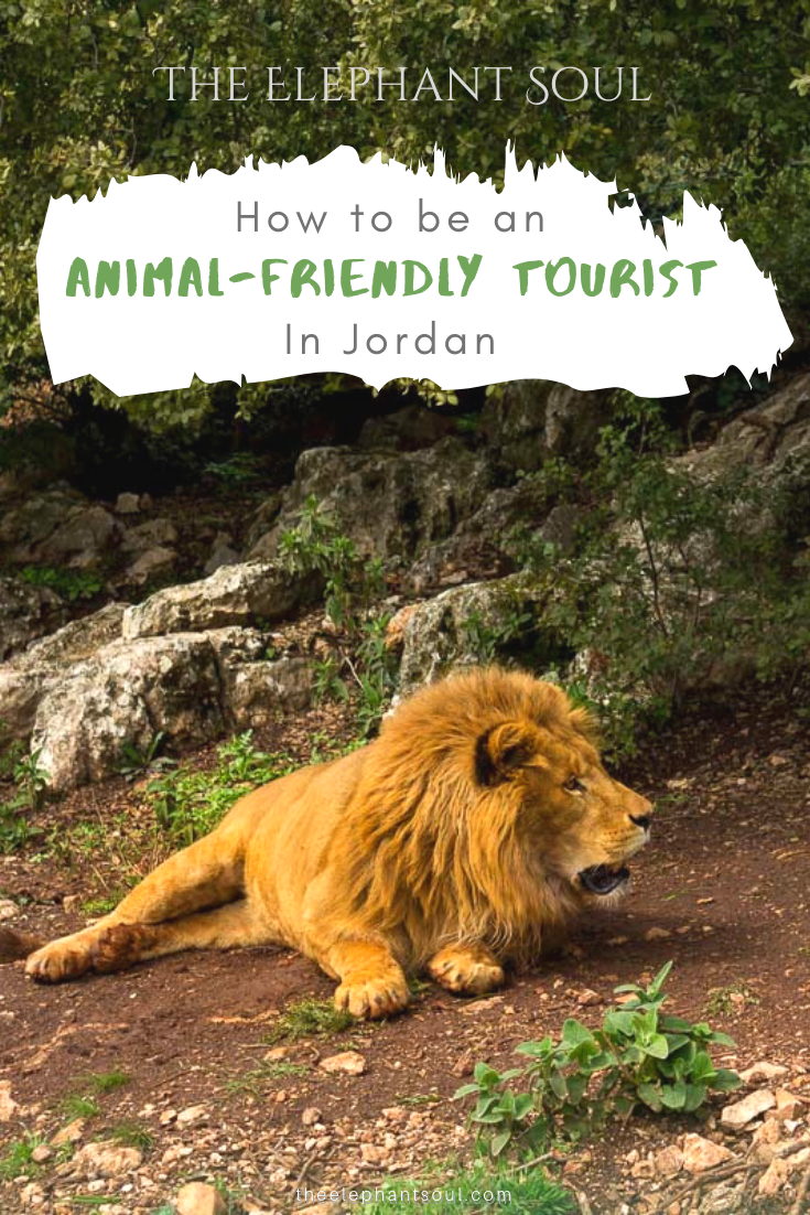 TES Blog - How to Be an Animal-Friendly Tourist in Jordan - Dos and Don'ts.png