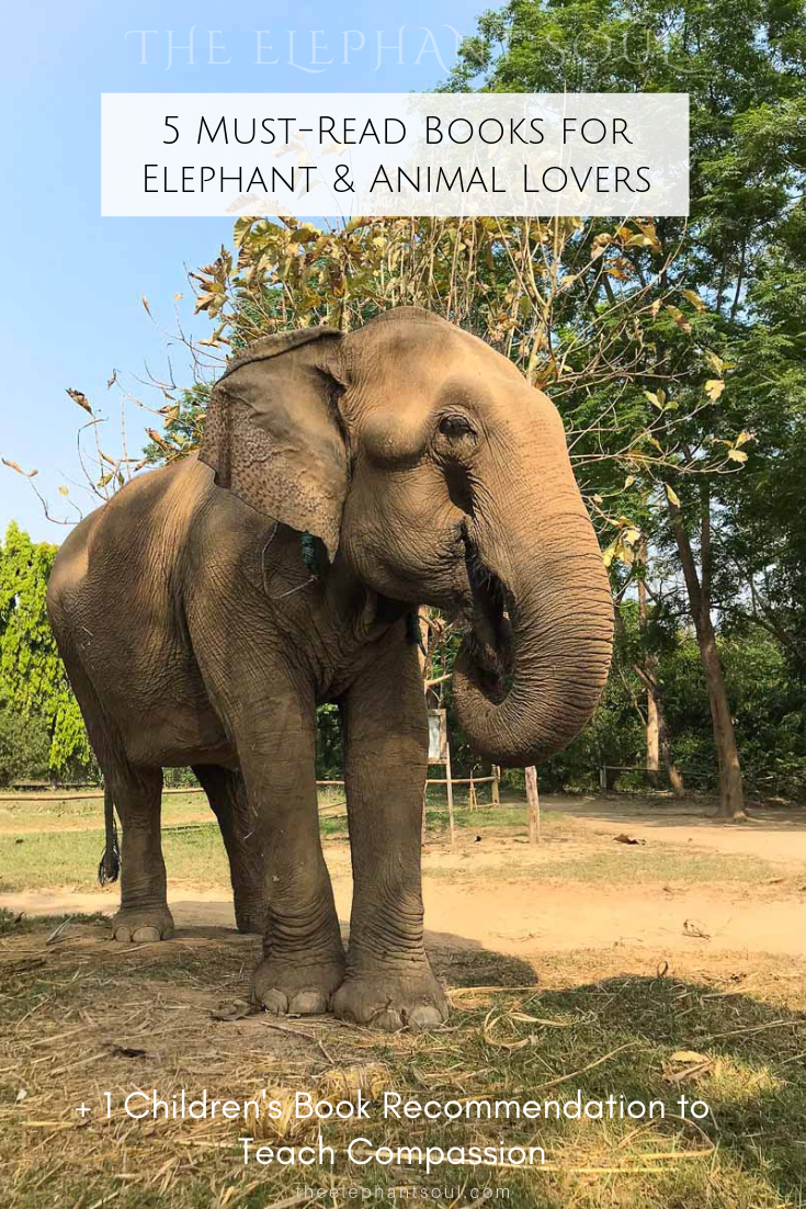 This image was taken during my recent visit to Tiger Tops, the only elephant-friendly resort in Chitwan, Nepal