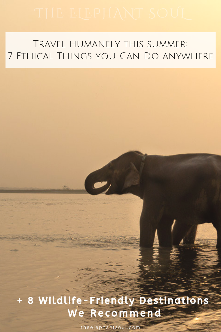 During my last trip to Nepal, I shared this beautiful sunset with these magnificent souls while sipping a nice cup of green tea. Seeing elephants enjoying themselves without being forced to work carrying tourists on their backs is priceless. To find out more about this unique eco-lodge visit  TigerTops  Image: ©Diana from The Elephant Soul
