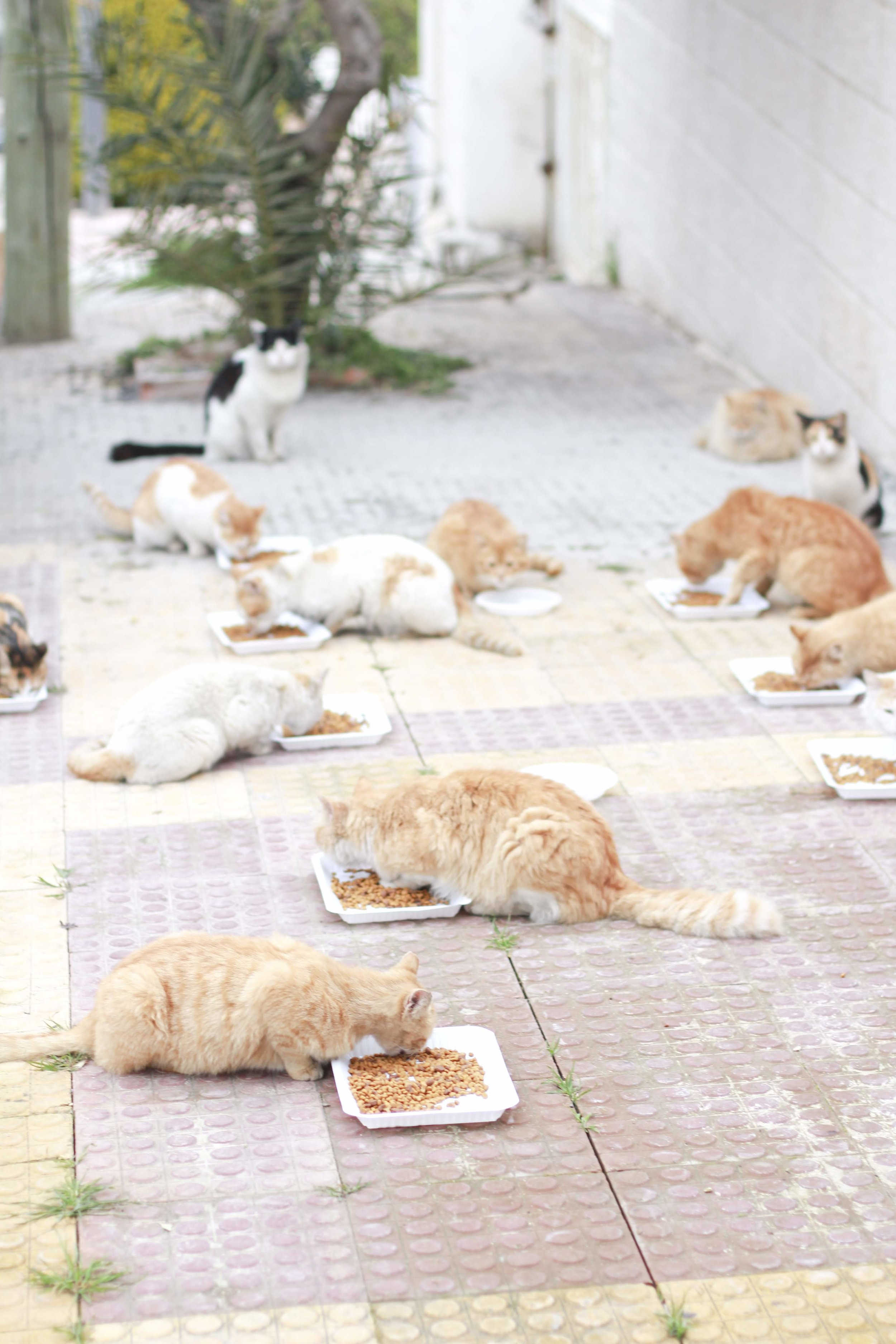 These stray cats have been all neutered and returned to their original street homes. Nina feeds them regularly and monitors if there are any in need of medical assistance, which she will ensure they get.